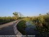 Everglades Anhinga morning walk  (14 of 42)