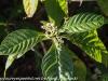 Everglades Anhinga morning walk  (18 of 42)