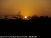 Everglades Anhinga morning walk  (2 of 42)