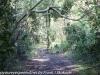 Everglades Anhinga morning walk  (20 of 42)