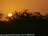 Everglades Anhinga morning walk  (3 of 42)