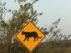 Everglades Anhinga morning walk  (5 of 42)
