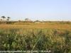 Everglades Anhinga morning walk  (8 of 42)