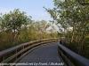 Everglades Anhinga morning walk  (9 of 42)