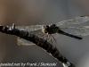 Flamingo Everglades hike dragonflies  (2 of 8)
