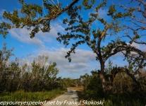 Flamingo Everglades hike  (1 of 25)