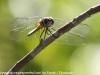 Everglades Mahogany Hammock  (10 of 17)