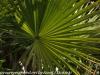Everglades Mahogany Hammock  (12 of 17)