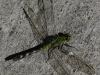Everglades Mahogany Hammock  (13 of 17)