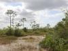 Everglades Mahogany Hammock  (15 of 17)