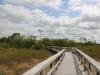 Everglades Mahogany Hammock  (16 of 17)