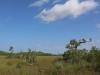 Everglades Mahogany Hammock  (3 of 17)