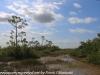 Everglades Mahogany Hammock  (4 of 17)