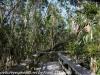 Everglades Mahogany Hammock  (5 of 17)