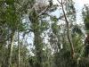 Everglades Mahogany Hammock  (6 of 17)