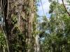 Everglades Mahogany Hammock  (7 of 17)