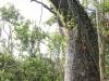 Everglades Mahogany Hammock  (8 of 17)