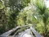 Everglades Mahogany Hammock  (9 of 17)