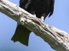 Everglades Mahogany Hammock  birds  (1 of 19)