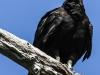 Everglades Mahogany Hammock  birds  (2 of 19)
