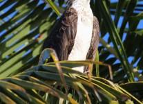 Fordia-Day-TwoFlamingo-Osprey-1-of-43
