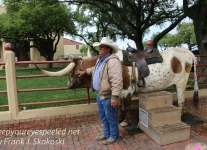 cattle drive -1