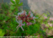 French-Creek-Flowers-1-of-22