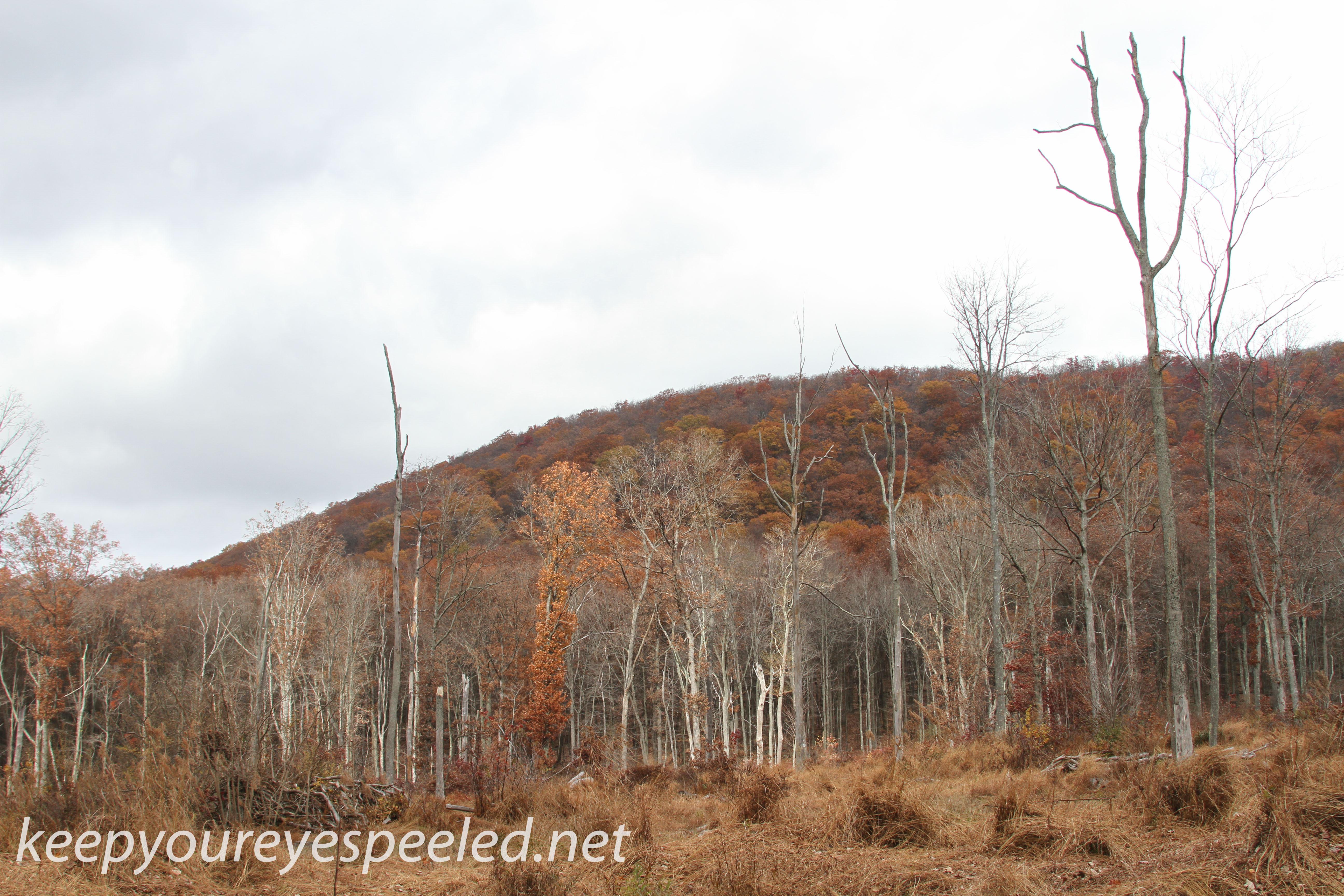 Girard Manor Lofty Reservoir hike (36 of 38)