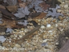 Girard Manor Lofty Reservoir hike (10 of 38)
