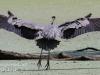 -great blue heron -254