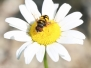 Insects June 28 2015