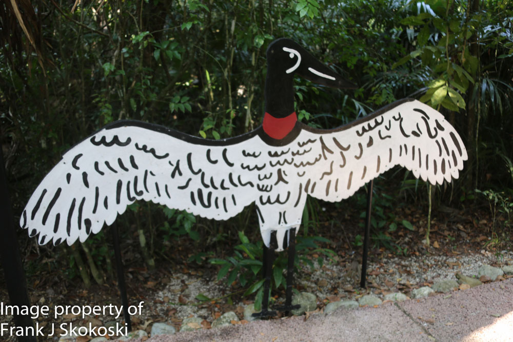 Jabiru stork (2 of 8).jpg