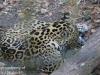 jaguar (2 of 9).jpg