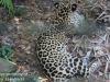 jaguar (9 of 9).jpg