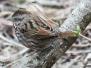 Lehigh Canal Weissport birds March 26 2017