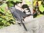 Lehigh Canal Weissport birds October 1 2017