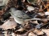 lehigh gap birds (1 of 25)