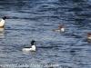 lehigh gap birds (13 of 25)