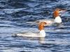 lehigh gap birds (15 of 25)