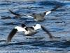lehigh gap birds (17 of 25)