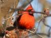lehigh gap birds (2 of 25)