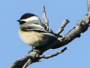 lehigh gap birds (4 of 25)