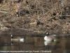lehigh gap birds (5 of 25)