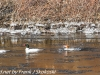 lehigh gap birds (7 of 25)
