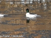 lehigh gap birds (8 of 25)