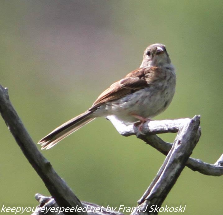 Lehigh Gap birds (10 of 31)