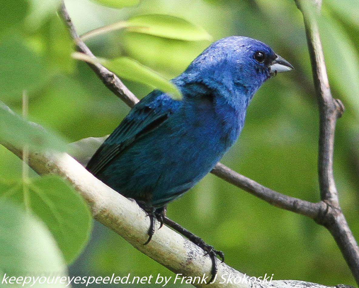 Lehigh Gap birds (15 of 31)