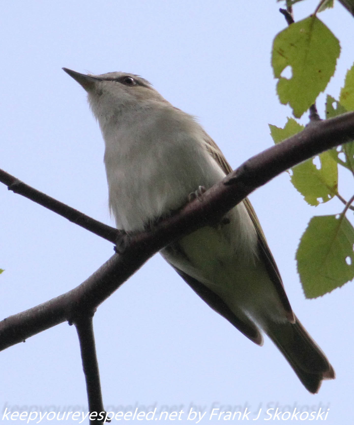 Lehigh Gap birds (22 of 31)