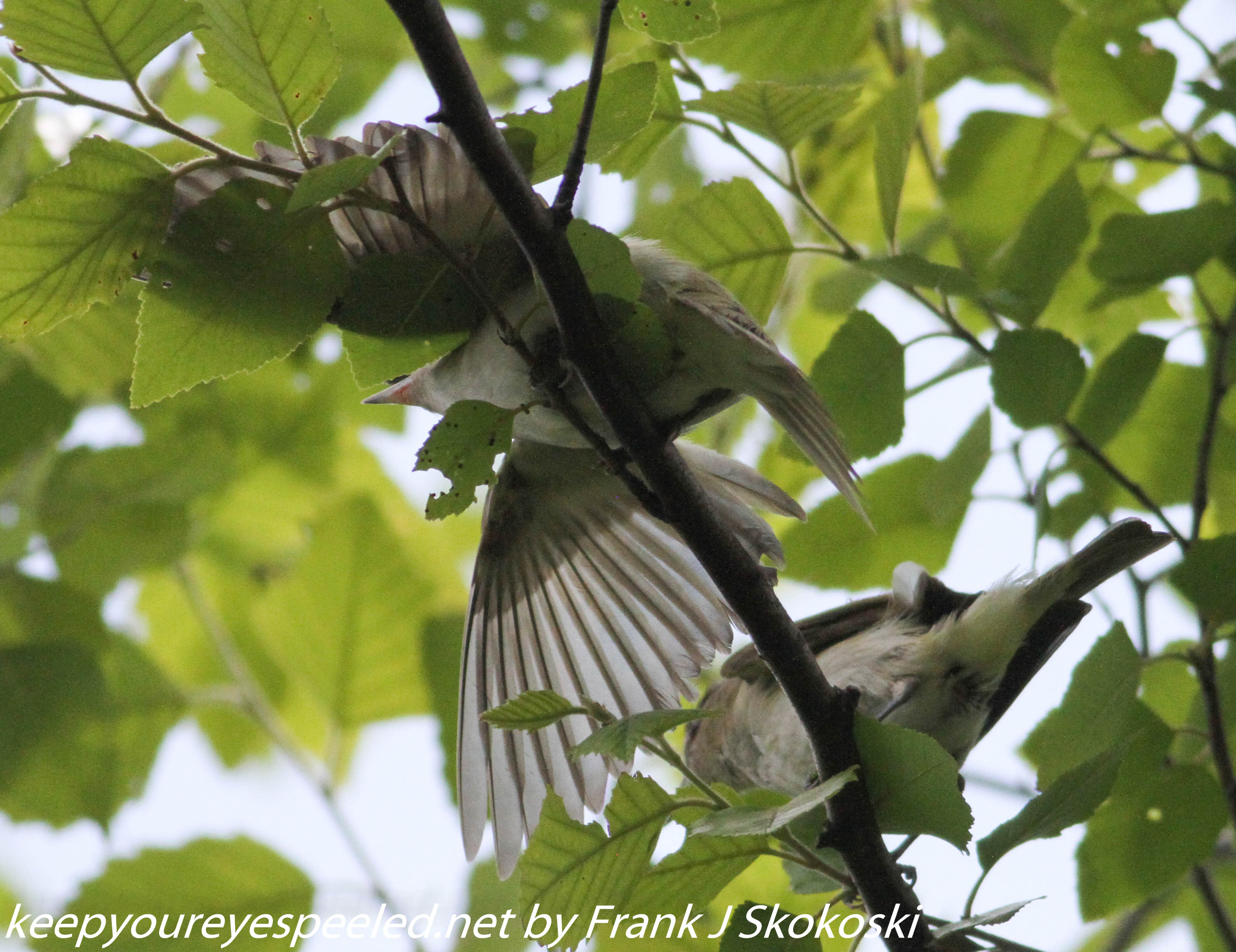Lehigh Gap birds (23 of 31)
