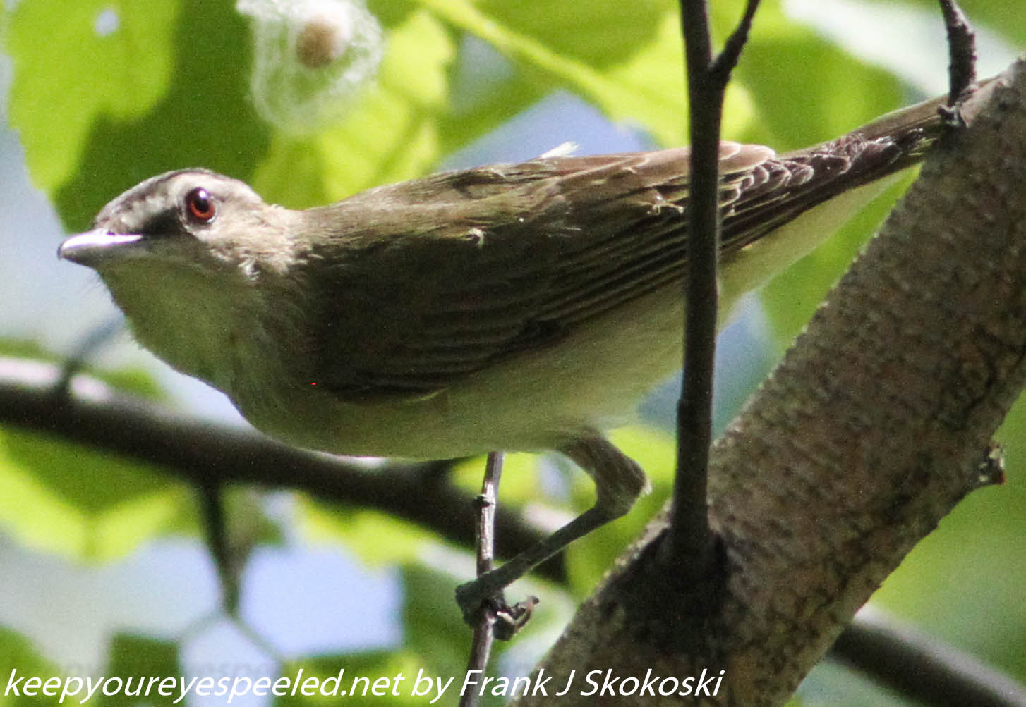Lehigh Gap birds (24 of 31)